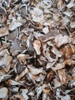 Austerseitlinge - getrocknet - 100g Packung