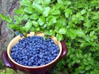Frische Heidelbeeren - 1 Kg Packung